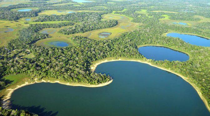Resultado de imagem para pantanal ms